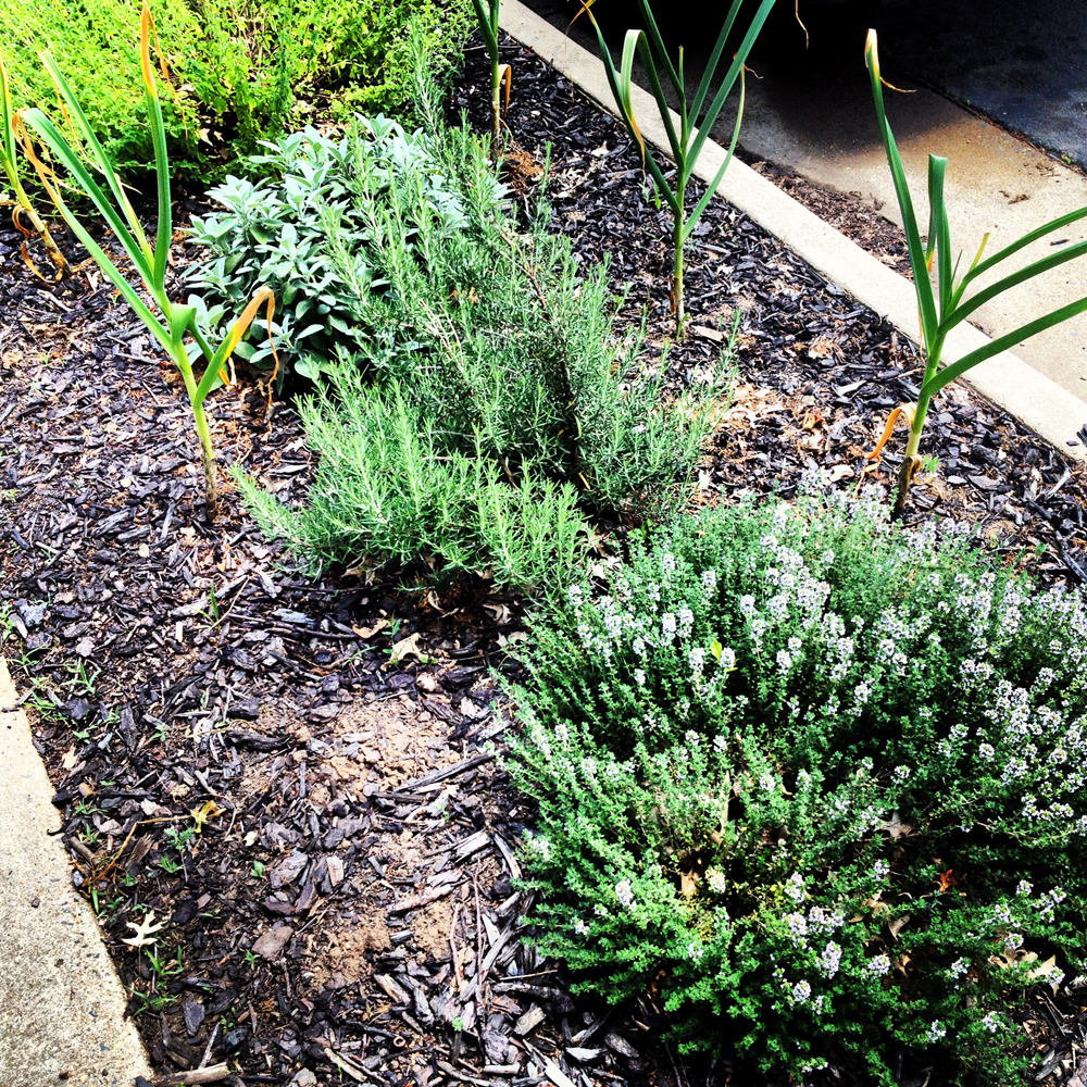herb bushes planted beside the curb in Huntington Virginia